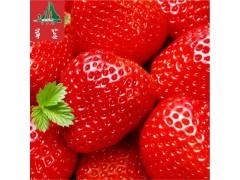 全国供应 四川凉山特产 新鲜现摘草莓   特级水果   鲜美多汁  大凉山水果欢迎洽谈!
