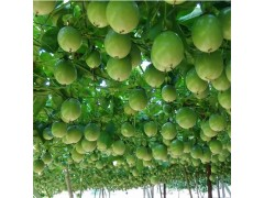 新鲜百香果/西番莲 孕妇水果 10斤装大果