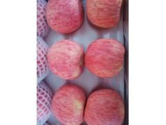 农邦果园休闲水果